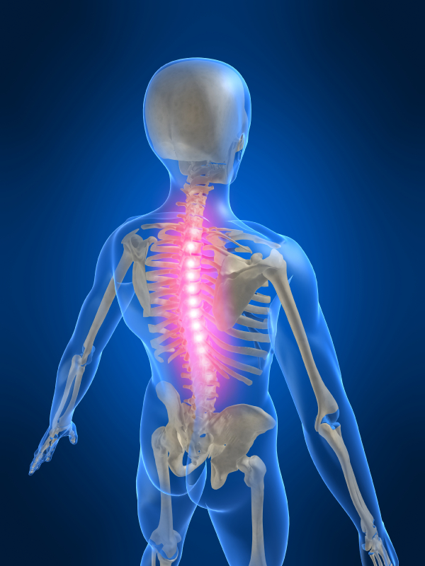 Illuminated model of spine